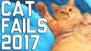 Hilarious Cat Fails (April 2017)