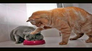 Funny Naughty Cats Compilation 2017 | Best Funny Cat Fails Vines