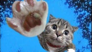 Funny Cats | Best Funny Cat Videos Ever  | Funny Kitty Cat Vines Compilation №60