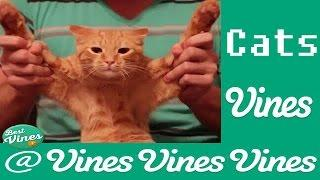 *NEW* Funny Cats Vines Compilation MARCH 2015 (50 vine)