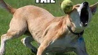 Funny Animals - Funny Dogs FAIL Compilation