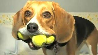 Funny Videos Of Funny Dogs And Puppies Compilation 2016 [BEST OF]