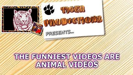 animal videos are the funniest videos funny animal compilation.