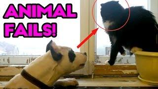 The Best ANIMAL FAILS! Funny Fail Compilation | April 2017 | Funny and Silly Cats, Dogs and Pets!