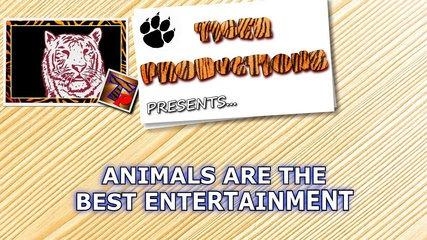 funny animals are the best entertainment funny animal compilation