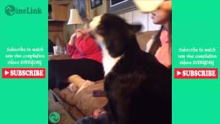 FUNNY CAT FAILS Vine Compilation New 2015