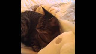 New funny cats Vines Compilation part 2