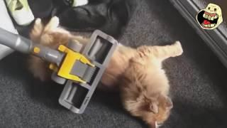 Funny Kitty Cat Videos |  Funny Cat & Cute Kittens Fail Vines 2016