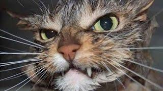 Funny Cats | Best Funny Cat Videos Ever  | Funny Kitty Cat Vines Compilation №68