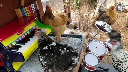 awesome chickens funny pet video compilation 2017