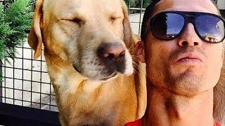 Wow Dog's Taking Amazing Funny Selfie