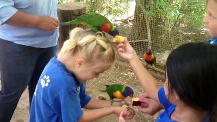 funny bird videos weekly compilation 2017 funny pet videos