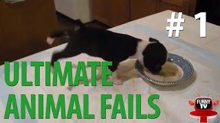 Ultimate Animal Fails 23 January 2015 || BEST FUNNY TV (funny cats, funny dogs, funny animals)