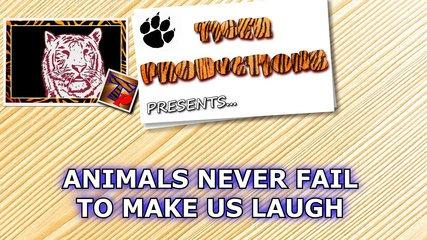 animals never fail to make us laugh super funny animal compilation.