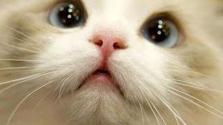 BEST 2 HOUR LONG FUNNY CAT COMPILATION - BIGGEST VIDEO of Funny Kitty Cat Fails & Kitten Moments