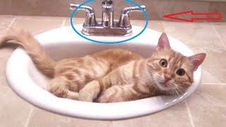 funny cats fails videos 2016 | funny cat and animals compilation vines try not to laugh or grin #L6