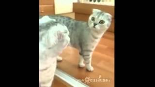 Funny Cat Vines Compilation November 2014 - Part 2