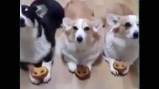 New Top 10 Funny Cat & Dogs Funny Videos 2017 Cat & Always With Me 2017 #2617