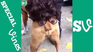 funny animals vines|funny cats and dogs vines|try not to laugh or grin