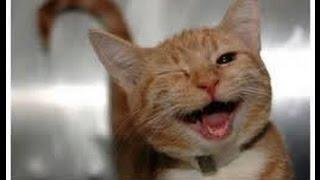 funny cat talking and singing so funny cat vines funny cats and dogs funny cats compilation funny