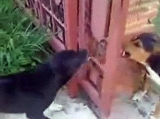 Funny - Dog battle but don't really want