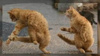 FUNNY ANIMAL FAILS COMPILATION - BEST CAT, DOG FAIL VINES 2017 Moments