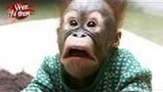 Very Funny Animals Fails vine 2016 Best ever funny vines - Best New