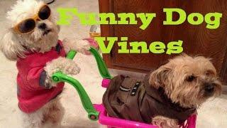 Funny Dog Vines ► Funny Dogs Compilation 2016 Try Not to Laugh! feat Funny Animals, Funniest Pets