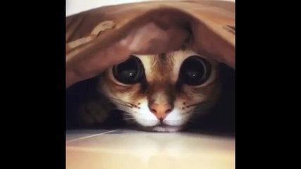 cat funny(4)